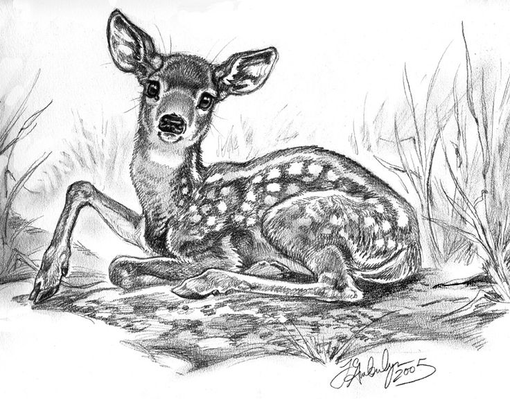 Pencil art pencil drawings reindeer hunting doe deere animaux drawings in pencil deer hunting graphite drawings