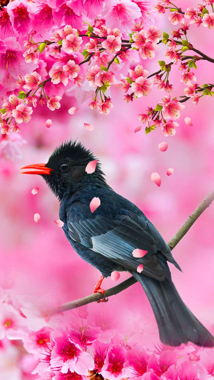 Cherry Blossom Pink Paradise Bird Chirp For A Lovely Morning Pink Petals Falling Pi Flower Phone Wallpaper Beautiful Nature Wallpaper Beautiful Wallpapers
