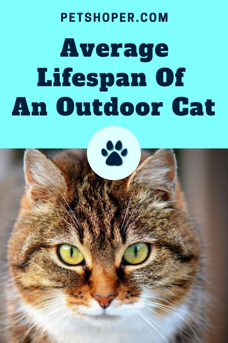 Average Lifespan Of An Outdoor Cat Cat Lifespan Outdoor Cats Cat Lifespan Cat Behavior