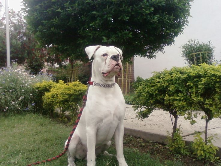 Image result for boxers white guardian