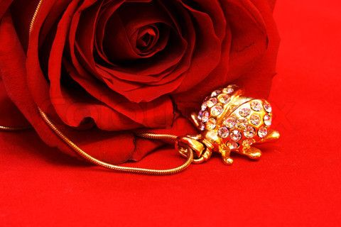 Golden Ladybug and Red Rose