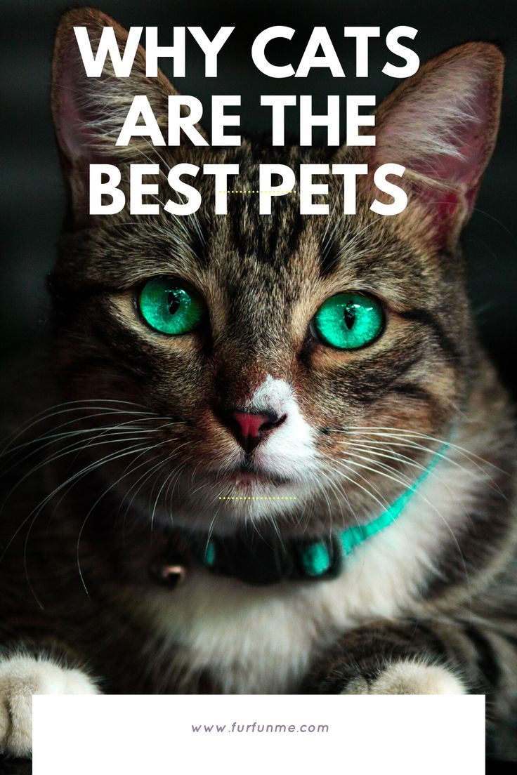 Why Cats Are The Best In 2020 Cat Health Cat Quotes Pets