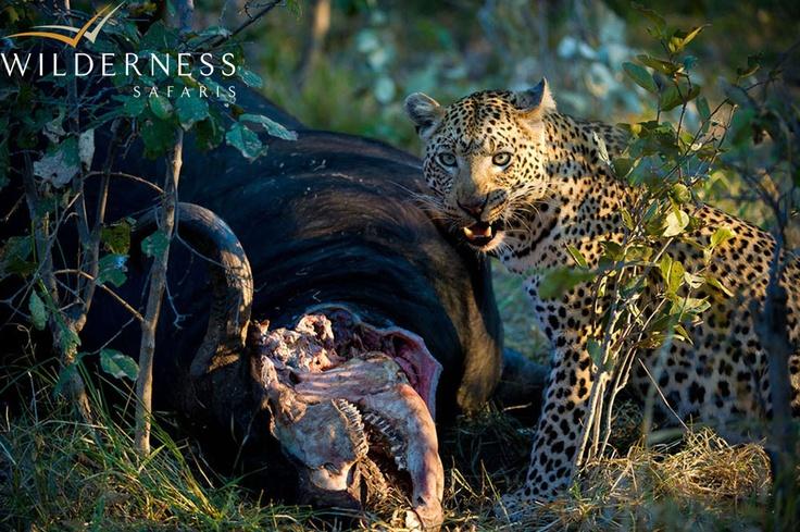 Vumbura Plains - Abundant prey species attracts an abundance of predators. #Safari #Africa #Botswana #WildernessSafaris