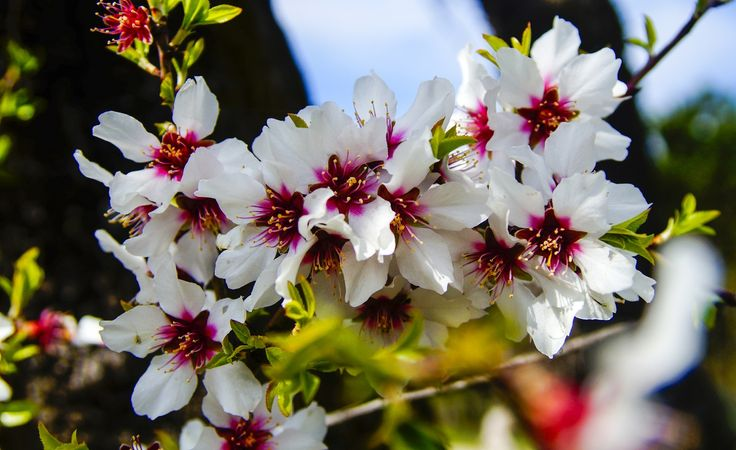 Almond blossom - If you like this work please Like ✔ Comment ✔ Share ✔ Follow ✔ Thank you for your visit.