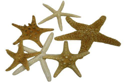 U.S. Shell, Inc. offer the best U.S. Shell, Inc. Starfish Mix.