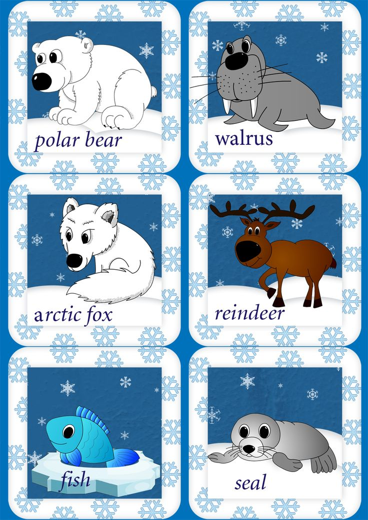 Arctic Animals English Flashcards Coloring Pages And Activity