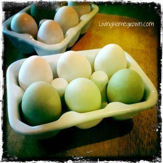 Fresh Eggs!: Fresh Eggs, Farm, Living Homegrown, Outdoors