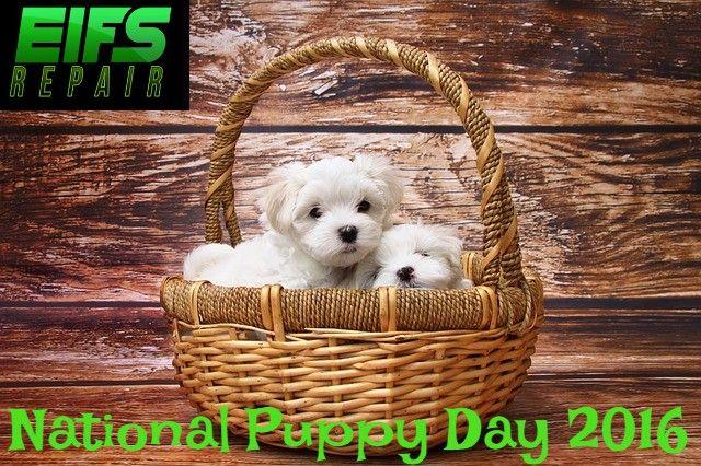 National Puppy Day 2016 #puppyDay #nationalPuyyDay #puppy #dog #dogLover http://ift.tt/1WIdZGv