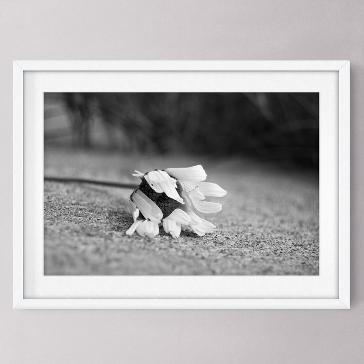 """Daisy Photo in Black and White, Daisy Photograph, Flower Photo, 12"""" x 18"""", Botanical Floral Nature Photography Art Print Wall Decor by PlayfulPixieStudio on Etsy"""