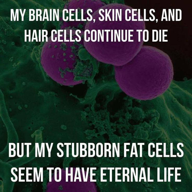 Why is fat the only cell that doesn't break down with age?