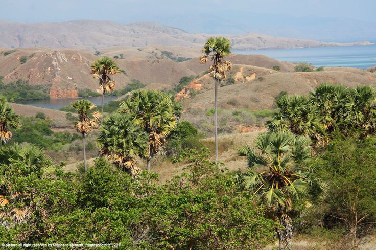 Pics Komodo and Rinca islands © java's beauty travel