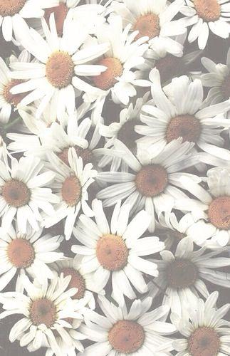White Flowers Aesthetic Wallpaper