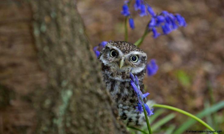 Flowers Cute Owl Wallpaper