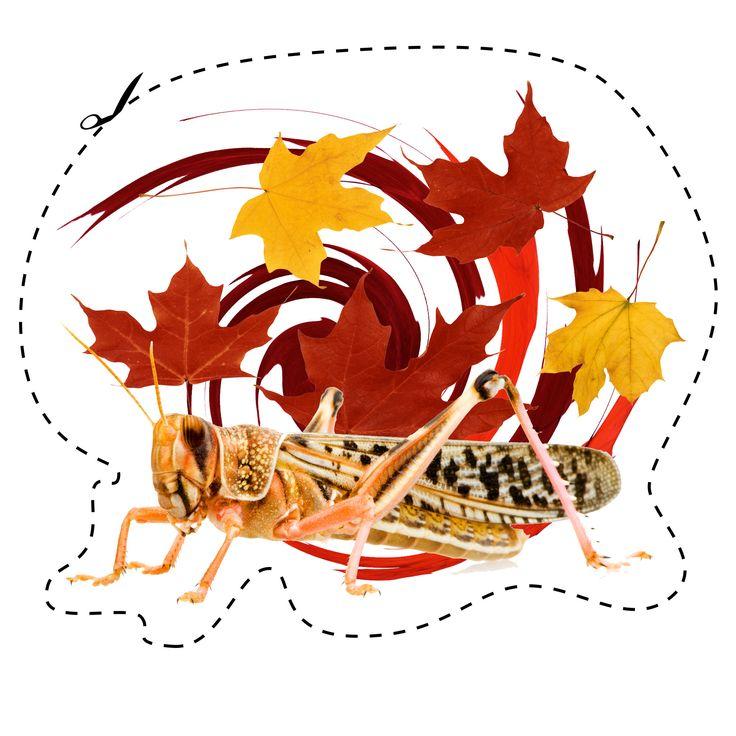 L'automne est arrivé! #automne #sauterelle #feuilles #couleurs  Fall is here! #fall #grasshopper #colors