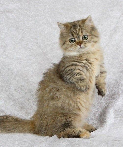 70 best Unique Cat Bre...