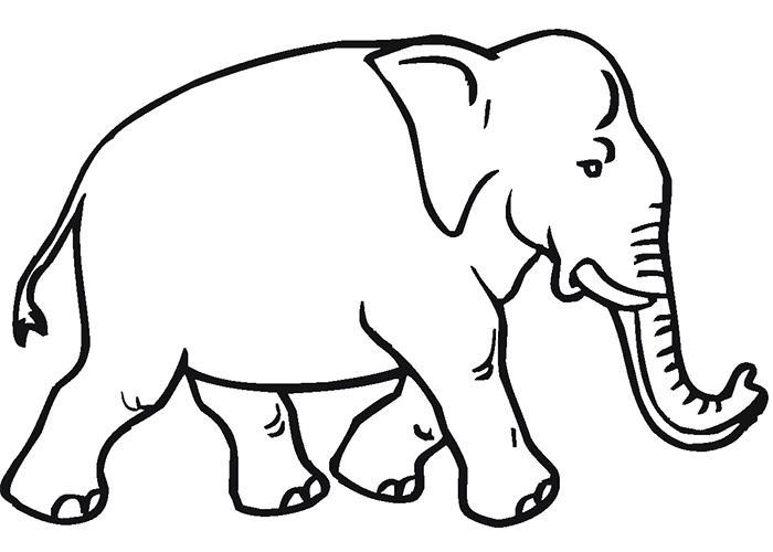 African Animal Template Animal Templates Free Premium Templates Elephant Coloring Page Animal Coloring Pages Animal Outline