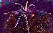 """New artwork for sale! - """" Arachnid by PixBreak Art """" - http://ift.tt/2sFAKlO"""