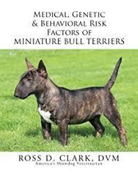 Afbeeldingsresultaat voor mini bull terrier