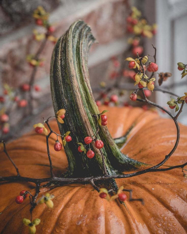 "492 Likes, 16 Comments - Thelen Image Gallery (@tinathelen) on Instagram: ""What to do on a cold rainy day? Play in the raindrops. This pumpkin had the most awesome stem just…"""