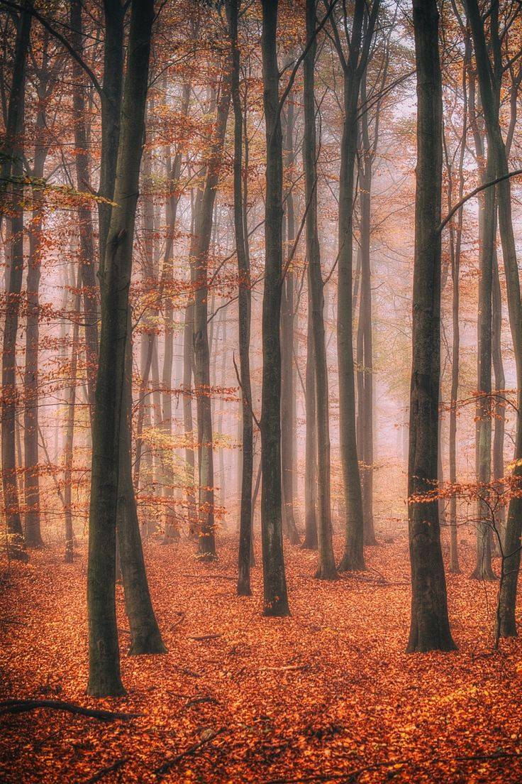 Photograph autumn by Anke Kneifel on 500px
