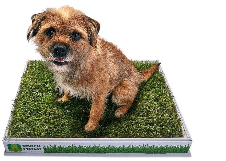 How to train the #dog for doing the #potty on #peepads? You may be slightly annoyed right away as a result of #pottytraining isn't progressing as quick as you had considered or your dog simply does not appear to get it. https://dog-potty.jimdo.com/