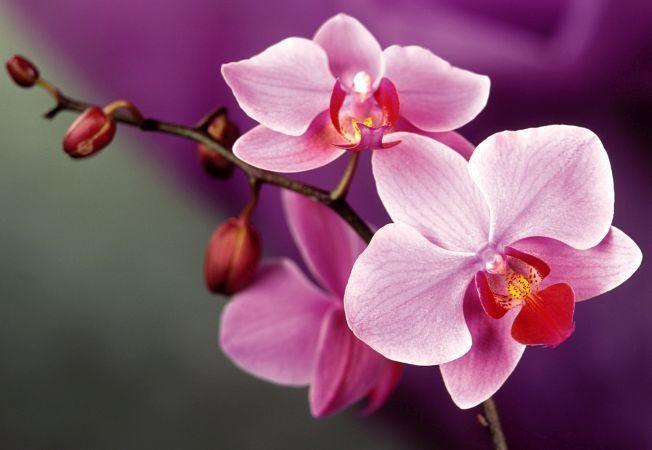 Vrei ca orhideele sa infloreasca an de an? Iata cum trebuie sa le ingrijesti!