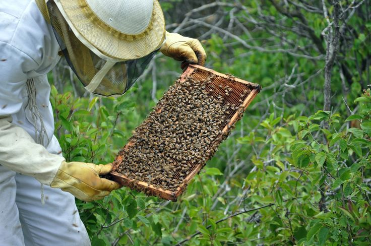 Greek beekeeper