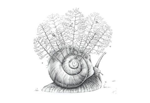Sarah Hardy has donated this art work Title: Snail Forest. Size: A3 Limited Edition Print www.popcornblue.com http://goo.gl/eCalKX