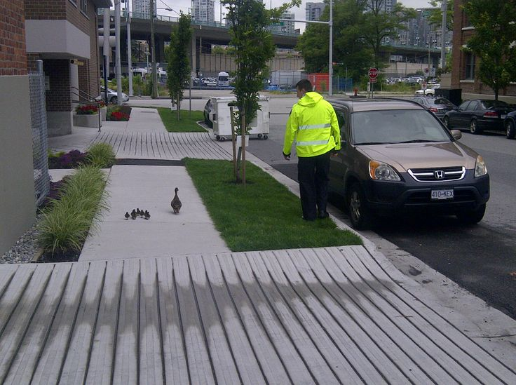 CSP escorts family of ducks across busy road in front of Vancouver Police HQ