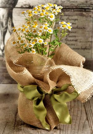 Burlap, Ribbon, Mason Jar (any vase) and Daisies! INSTANT RECEPTION TABLE DECOR!!