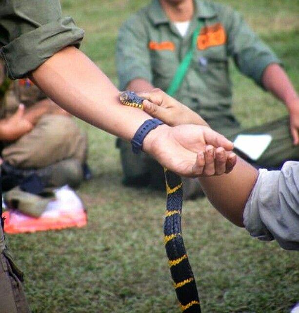 Snake Bite - WANADRI Basic Training
