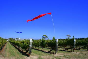 Wellington Wine Tasting & Winery Tours