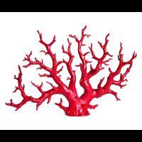 Stile marina_elemento decorativo, corallo rosso