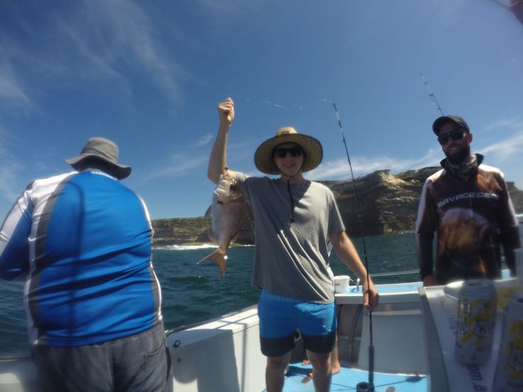 Snapper punching off the Kingfish... - http://sydneypremiumfishingcharters.com.au/snapper-punching-off-the-kingfish/