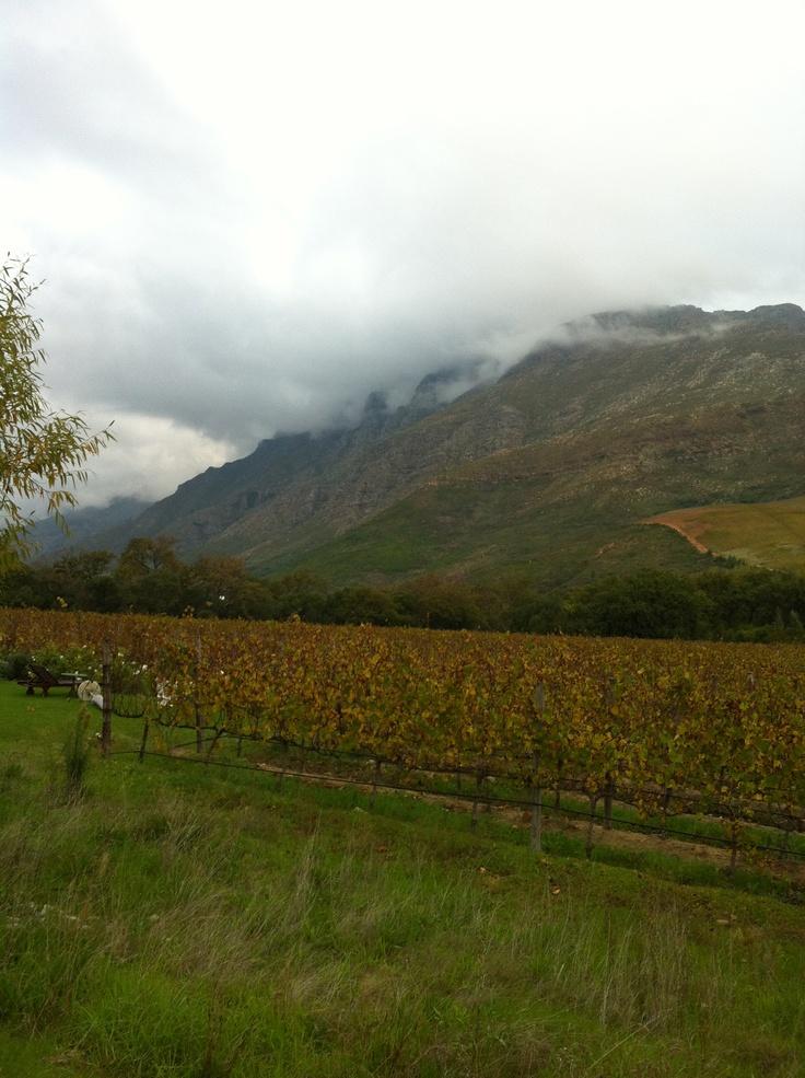 Heart of wine country....the stunning Stellenbosch