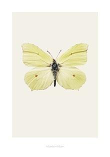 Poster Butterfly Dust Hagedornhagen - Lunehjem.no Nettbutikk