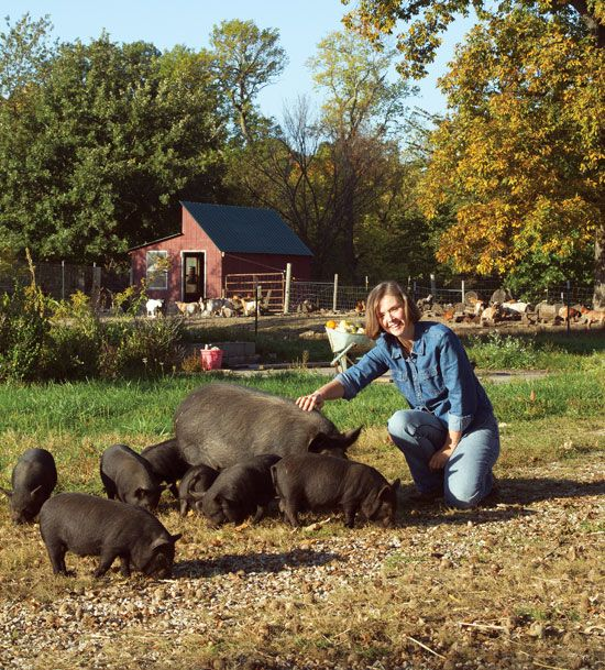 """The American Guinea Hog: A Small Pig Breed for Homesteaders"" - A heritage hog breed, the American Guinea hog may be the best pig for your small homestead. Raise these hogs on pasture for superb meat and charcuterie. From MOTHER EARTH NEWS"