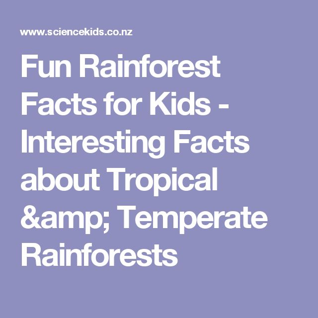Fun Rainforest Facts for Kids - Interesting Facts about Tropical & Temperate Rainforests