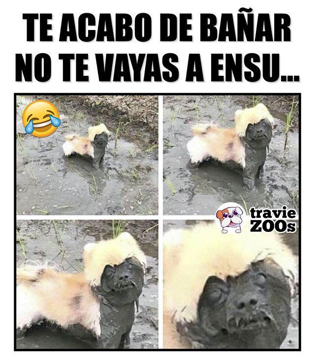 Demasiado Tarde Cute Animal Memes Animal Memes Book Memes