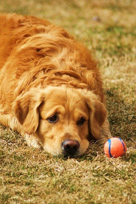 This is so Charlie & the exact same ball he is obsessed with!!! @Katelyn Trotter