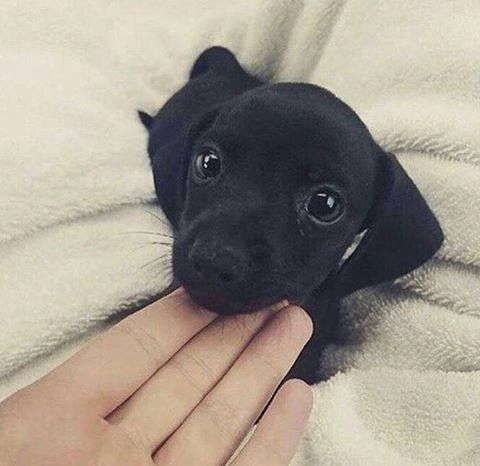 Oh my goodness. Look at this little face.