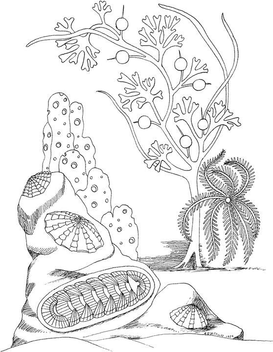 254 best Om en in het water images on Pinterest Draw, Mandalas and - best of under the sea coral coloring pages