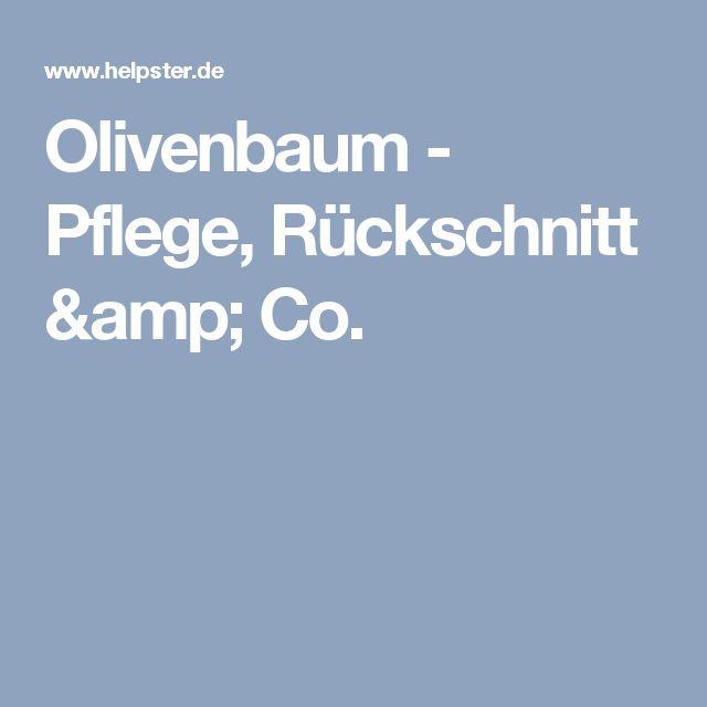 Olivenbaum - Pflege, Rückschnitt & Co.