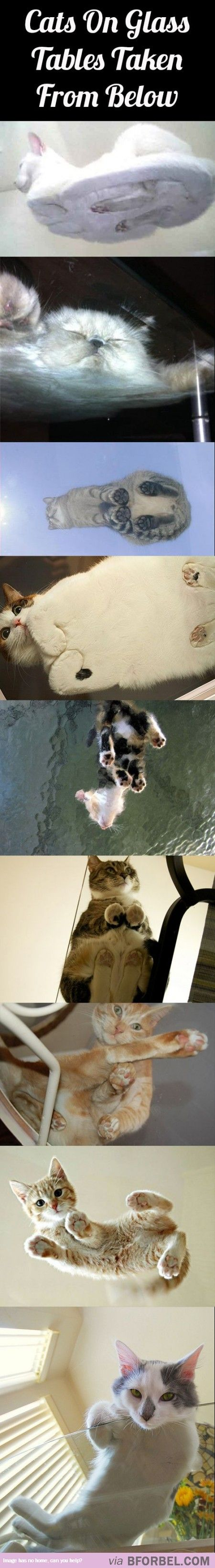10 Photos Of Cats On Glass Tables Taken From The Bottom…