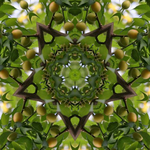 kaleidoscope.  Look closely!  The design is made from a picture of tree with fruit, manipulated to form a kaleidoscope!  Love it!