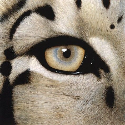 Love the markings and this eye colour