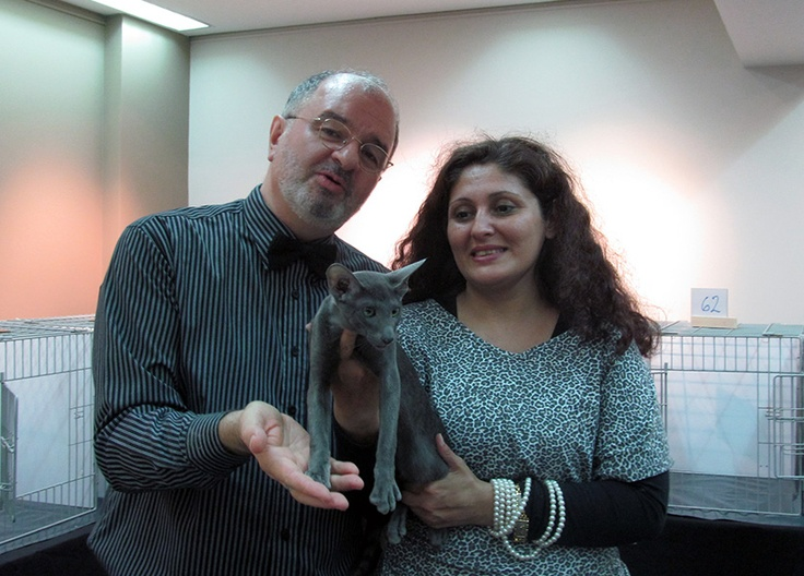 Mr Luiz Paulo Faccioli, Ana and NarkiAyun Danubio - 3rd Best of the Best Kitten - TICAdelPlata, May 18-19, 2013 - Buenos Aires, Argentina