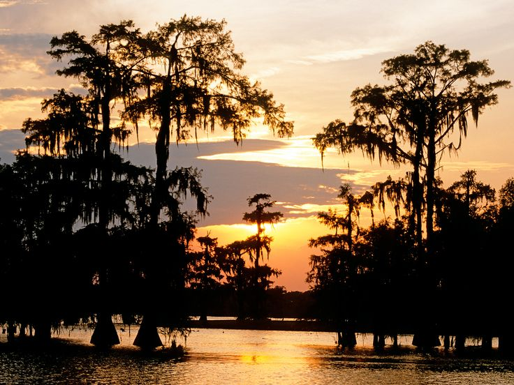 Far from being murky, boggy areas, the world's swamps, deltas, and wetlands are teeming with wildlife, fascinating landscapes, and their own unique cultures. Here are eight great swamps to visit, from Botswana's Okavango Delta to Louisiana's Atchafalaya.