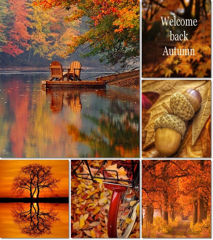 ❧ Collages de photos ❧ ...moodboard fall by AT