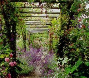 Пергола для поддержки вьющихся растений
